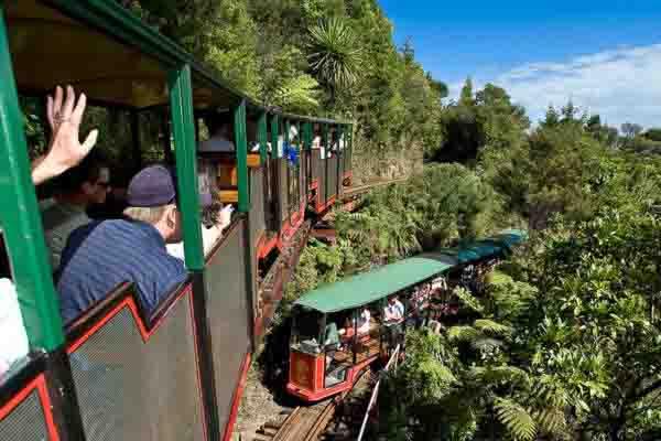 Driving creek railway on coromandel day tour
