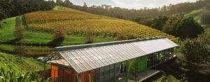 Auckland wine tour - Brick Bay winery