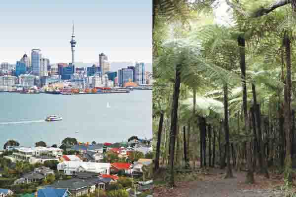 view of auckland city and tree ferns on bush and beach city and nature tour