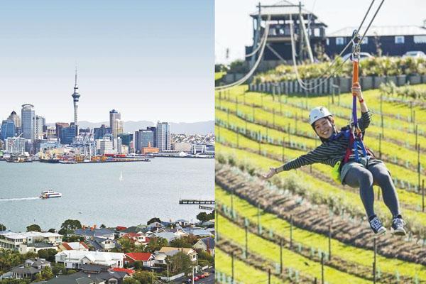 Auckland city tour and eco zip on Waiheke